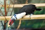 зоопарк екатеринбурга приглашает на месяц птиц