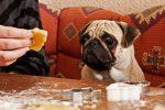 Родители в Новой Зеландии накормили детей собачьим печеньем
