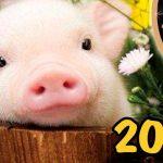 2019 год какого животного