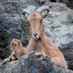как животные воспитывают своих детенышей